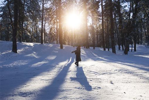 冬の日差しのイメージ